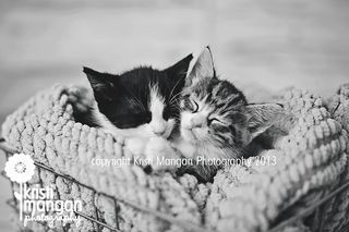 Kitties_blog