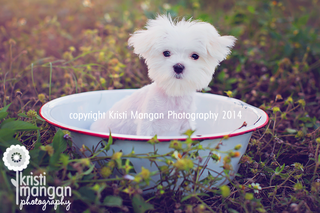 Kristimanganphotography_jupiterpetphotographer_blog